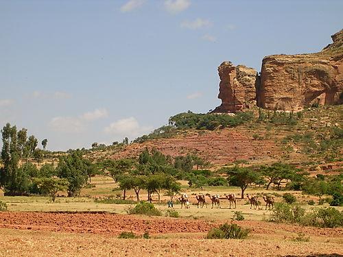 Orga_id122_ETHIOPIE_T_C1_0136