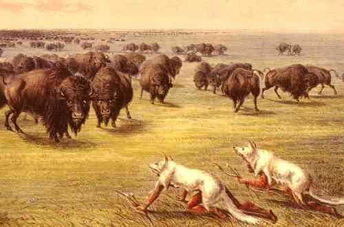 Buffalohuntwolfskin1830catlin