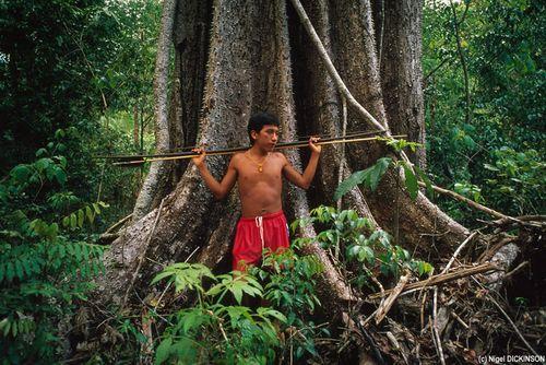 53180-Yanomami_107230