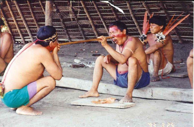 Yanomamo taking yopo