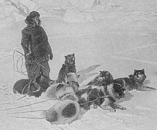 Amundsen chiens eskimos