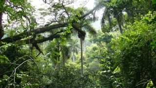 Foret-tropicale-plus-belle-photo-foret_93832