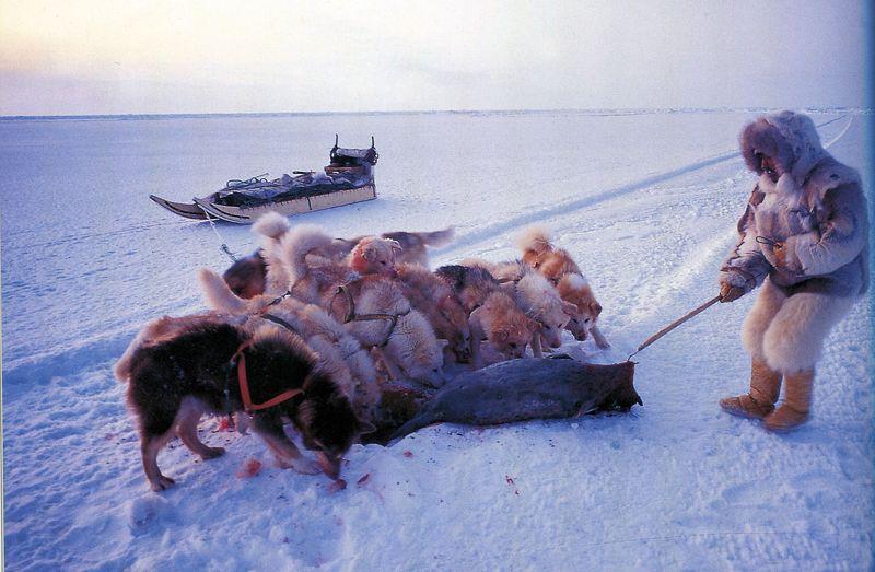 Inuit080