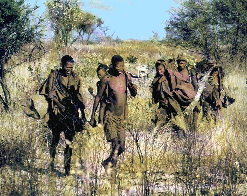Bush dans kalahari