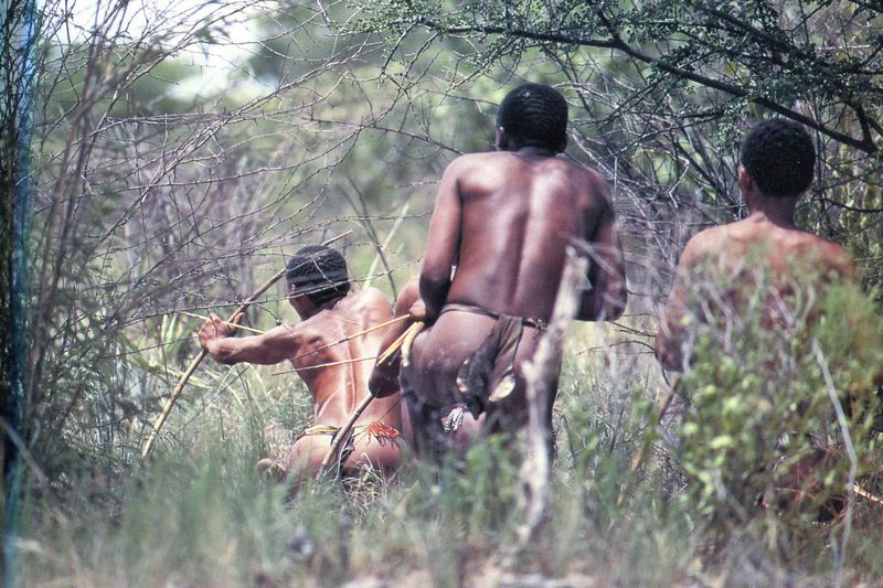 BUSHMEN959_modifié-2