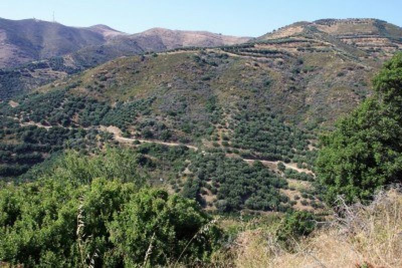 10061453-paysage-de-montagne-en-crete-avec-des-champs-d-39-oliviers