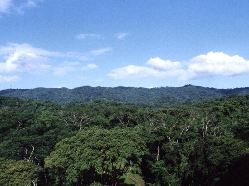 Laclacanhaforest1