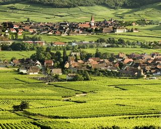 Paysage-Alsace