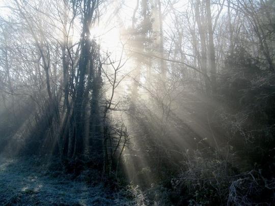 Brume-bois-hiver-serverin-rhone-903711