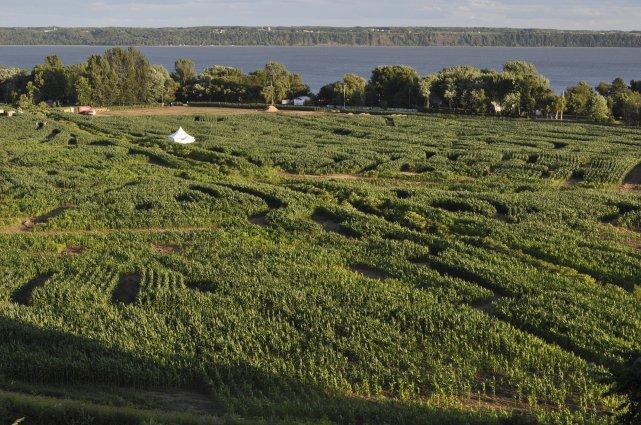 534958-labyrinthe-vegetal-donnacona-ne-repoussera