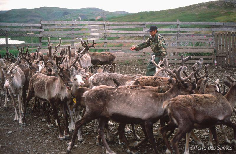 Les-Sames-et-les-rennes