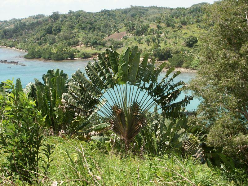 Regard Eloigne Au Pays De L Arbre Du Voyageur Madagascar