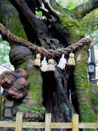 76828d509b7b2558667c8ba0a18fe164--japanese-architecture-ropes