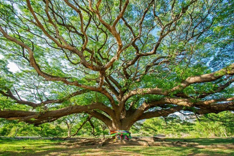 Animism-tree