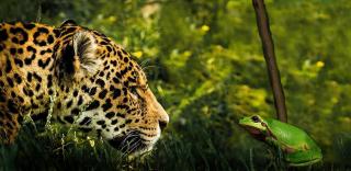 Quels_sont_les_animaux_les_plus_dangereux_d_amazonie_2341_orig