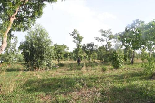 Forêt-de-Kua-à-Bobo (1)