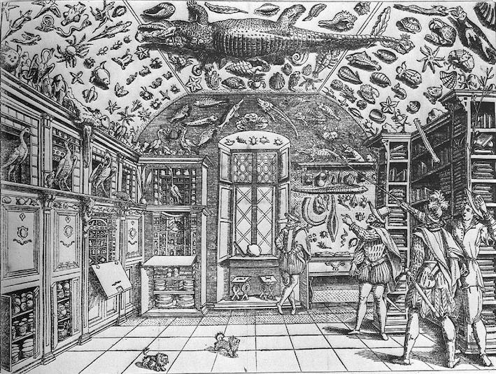 Gravure-cabinet-curiosites-primitif-bulle-soclage-ferrante-imperato-renaissa
